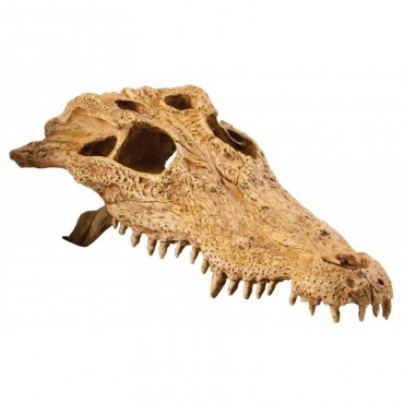 Декорация для террариума Exo Terra Череп крокодила (PT2856)